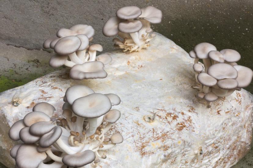 A Mushroom Grow Kit Beginner Guide | Mushroom Insider